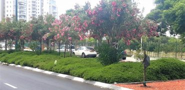 Apartment for sale Netanya